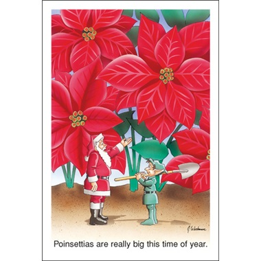 The Poinsettias Are Really Big